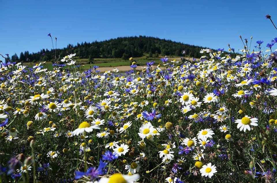 zwiazkimilosci.pl: łąka pełna białych i fioletowych kwiatów