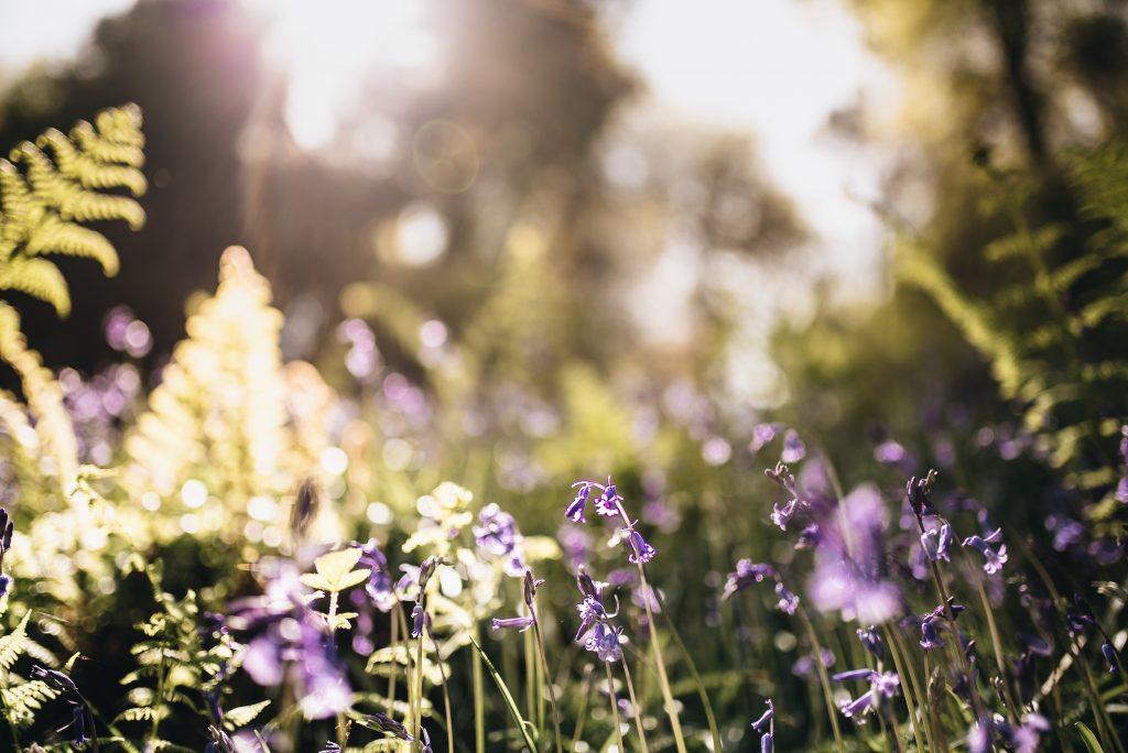 zwiazkimilosci.pl: łąka pełna kwiatów zdjęcie makro