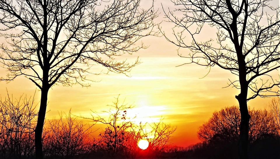 zwiazkimilosci.pl: zachód słońca dwa bezlistne drzewa
