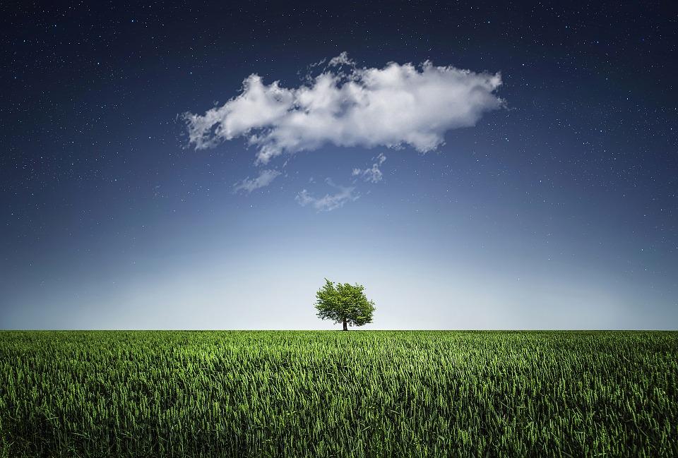 zwiazkimilosci.pl: chmura samotne drzewo wśród trawy