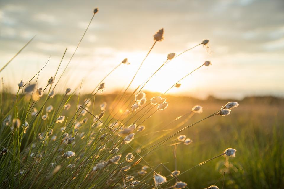 łąka pełna kwiatów słoneczna łąka