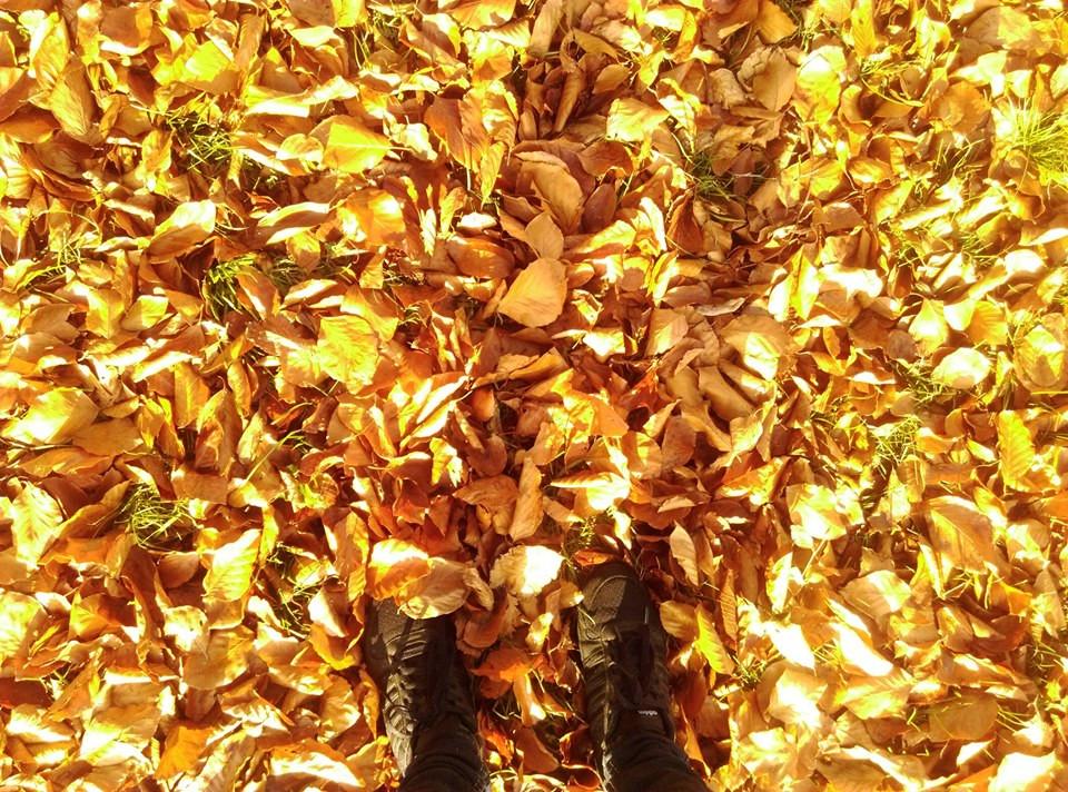 jesień pełna liści